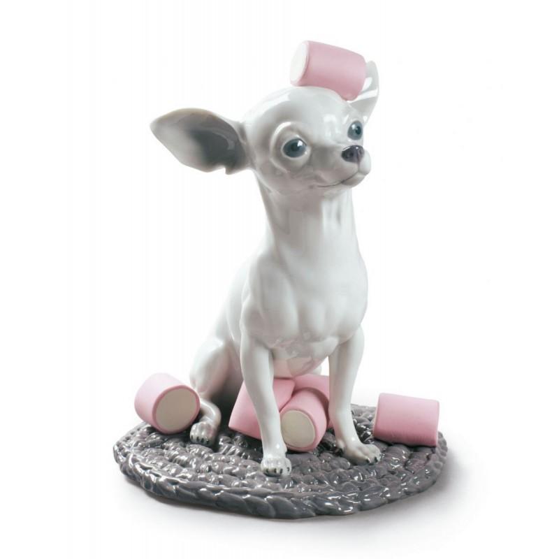 Chihuahua con Marshmallows